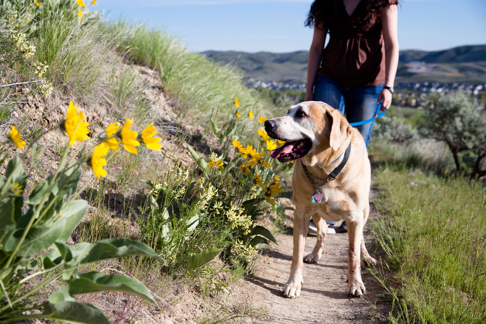 Dog looking up trail as family follows behind