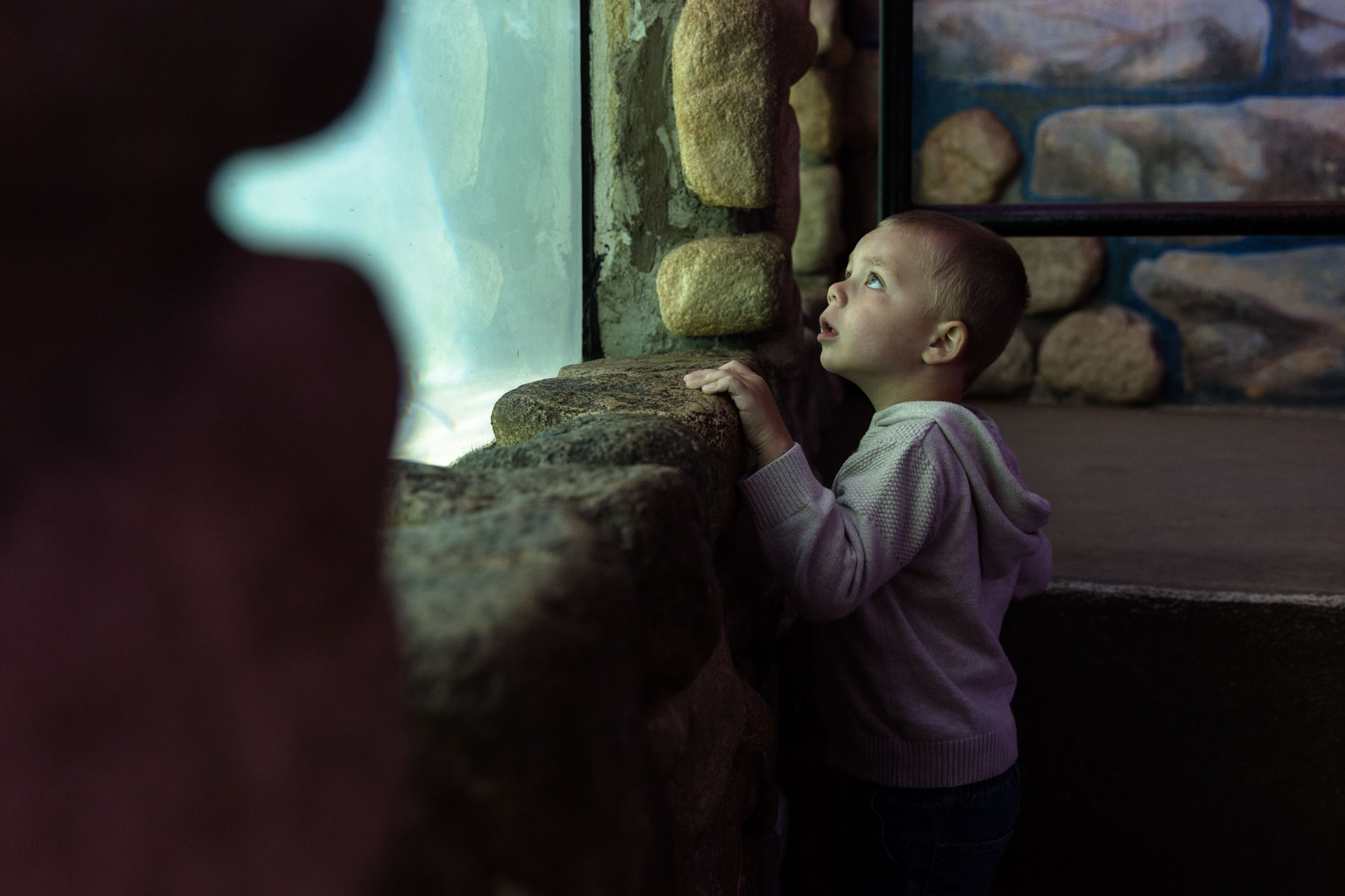 Boy looking through the glass up at the penguins at the zoo