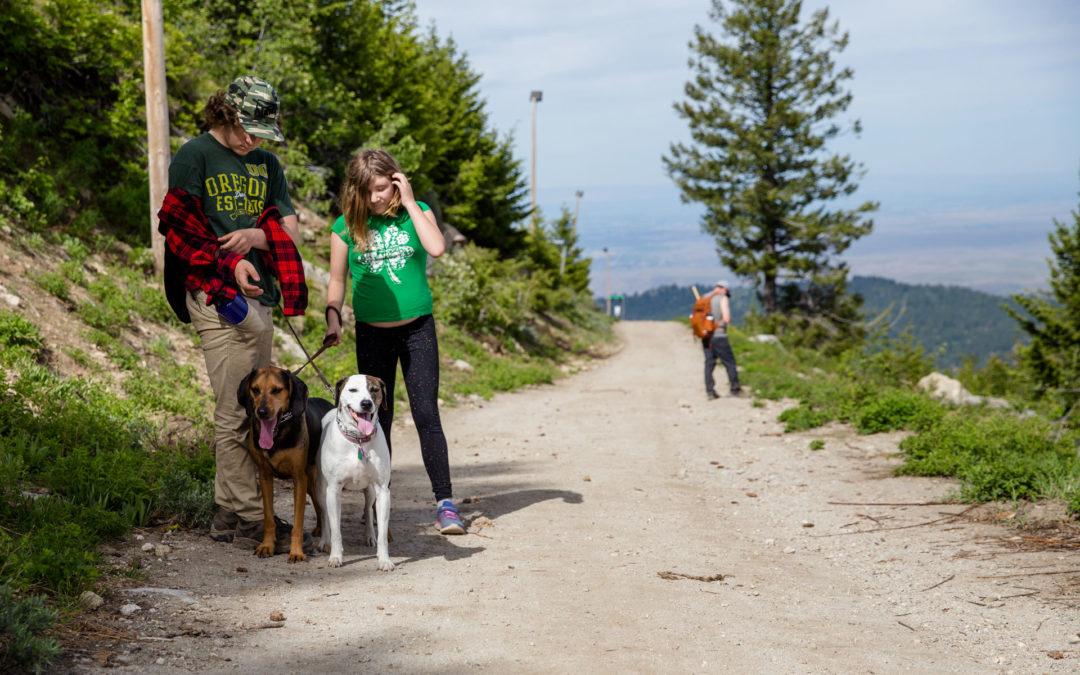Two teens standing with dogs on the top of a mountain hiking trail while dad is looking at view behind them
